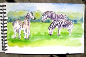 Monica's zebra sketch