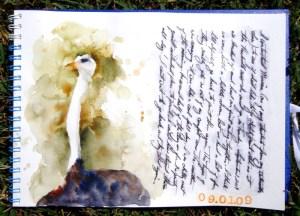 My ostrich sketch