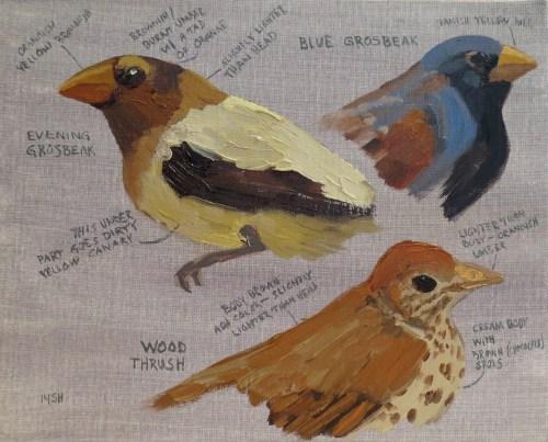 dc birds, 8x10, oil, sandi hestser