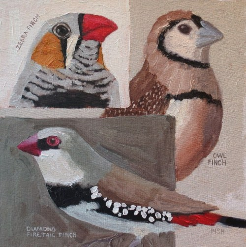 Trio of Finch, 12x12 oil, sandi hester